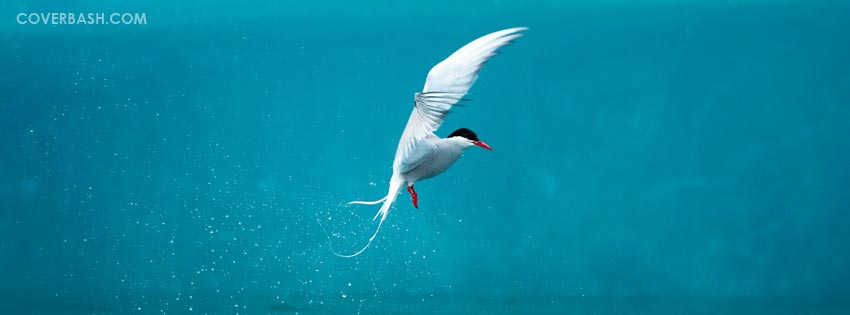 arctic tern facebook cover