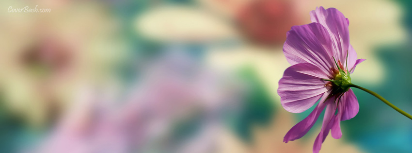beautiful purple flower facebook cover