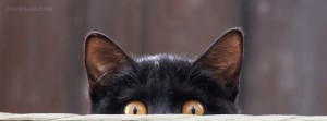 cute cat watching facebook cover
