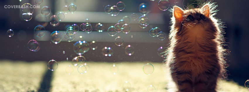 cat enjoying bubbles facebook cover