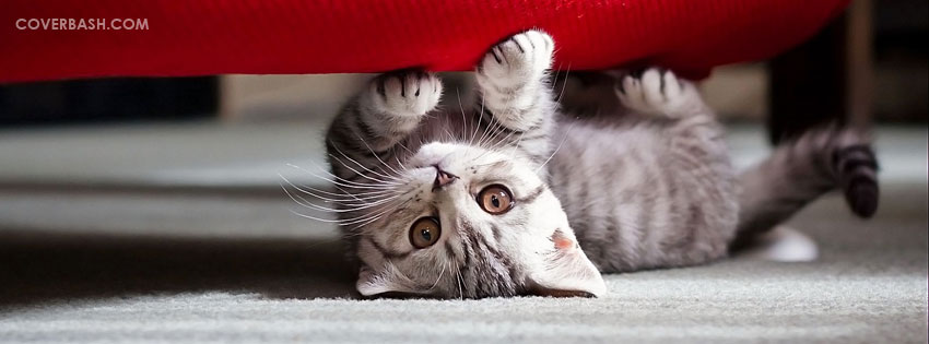 cat under couch facebook cover