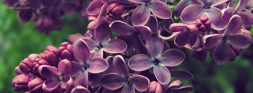 flower bunch facebook cover
