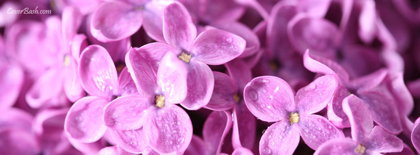 little purple flowers facebook cover