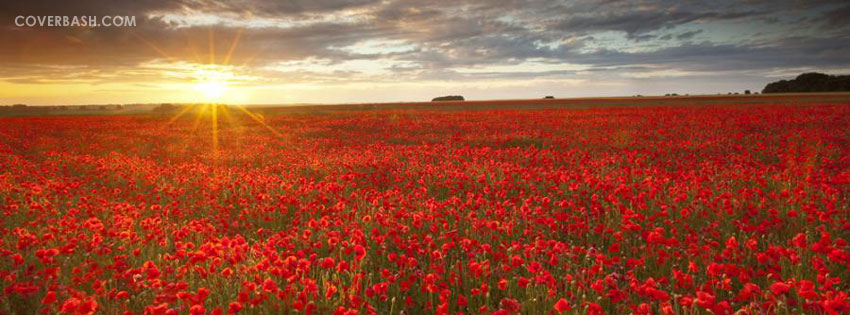 poppy valley facebook cover
