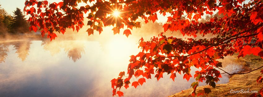 red autumn leaves facebook cover
