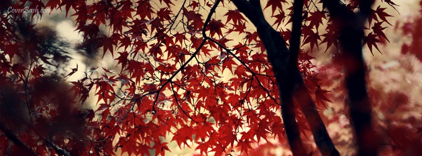 red leaves facebook cover