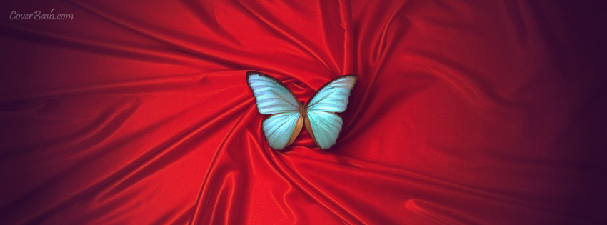 silky butterfly facebook cover