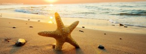 the starfish facebook cover
