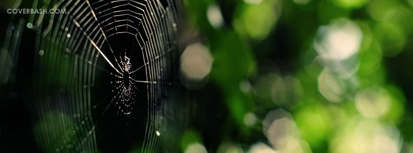 the spider facebook cover