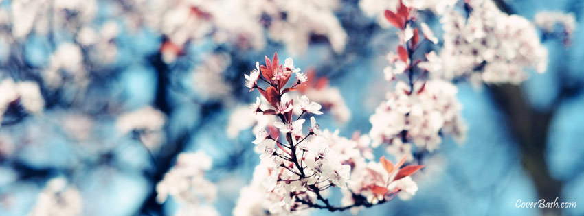 white flowers in blue sky facebook cover